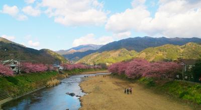 河津桜 (3)1.jpg
