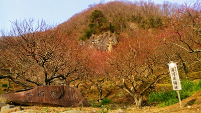 湯河原幕山公園梅林1.jpg