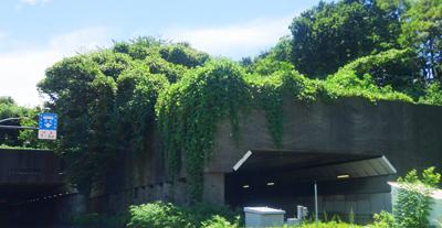 神奈川のトンネル1.jpg